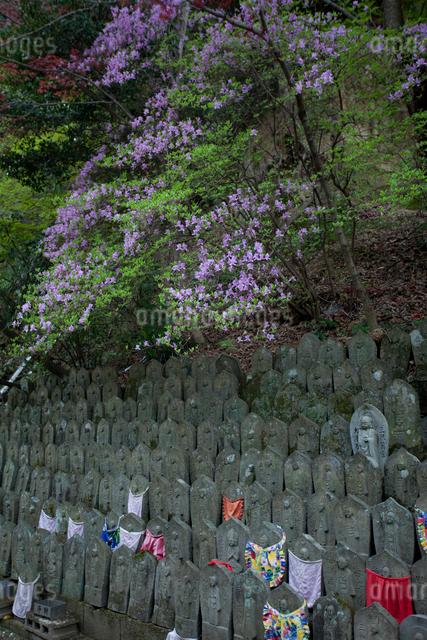 石仏とツツジ、四国八十八ヶ所、第58番仙遊寺の写真素材 [FYI03303591]