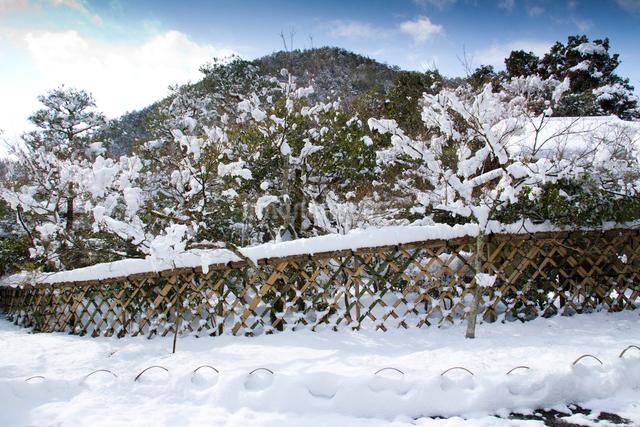 雪の光悦垣の写真素材 [FYI03303608]