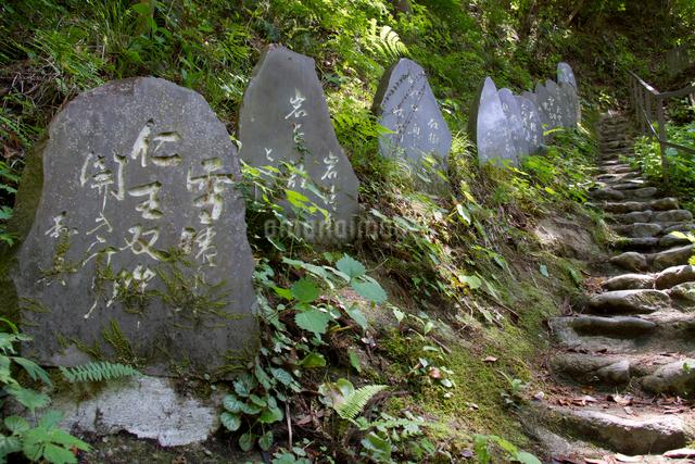 秩父三十四ヵ所 第三十一番 観音院の石段に並ぶ句碑の写真素材 [FYI03303729]