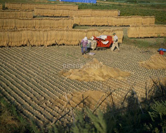 農作業の写真素材 [FYI03303768]