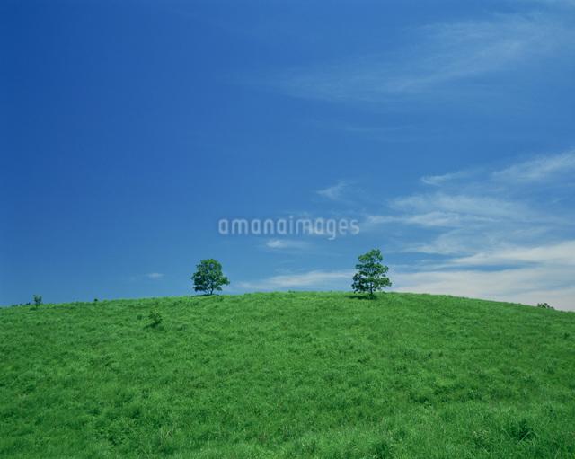 草原と樹の写真素材 [FYI03303799]