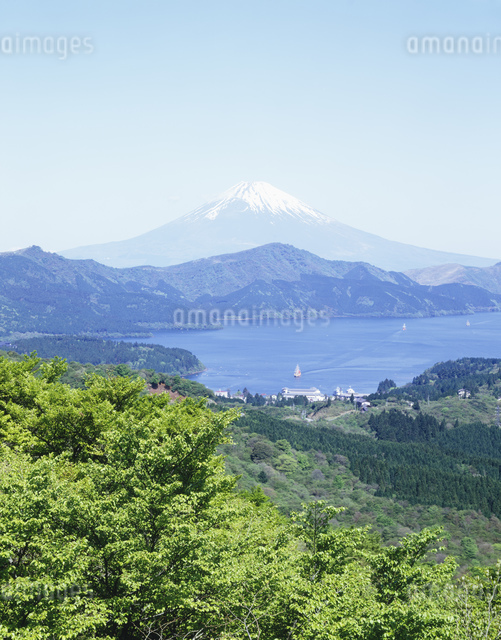 新緑の大観山より望む富士山の写真素材 [FYI03303801]