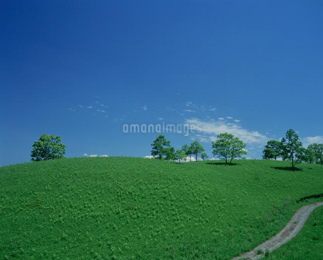 草原と樹 阿蘇山の写真素材 [FYI03303802]