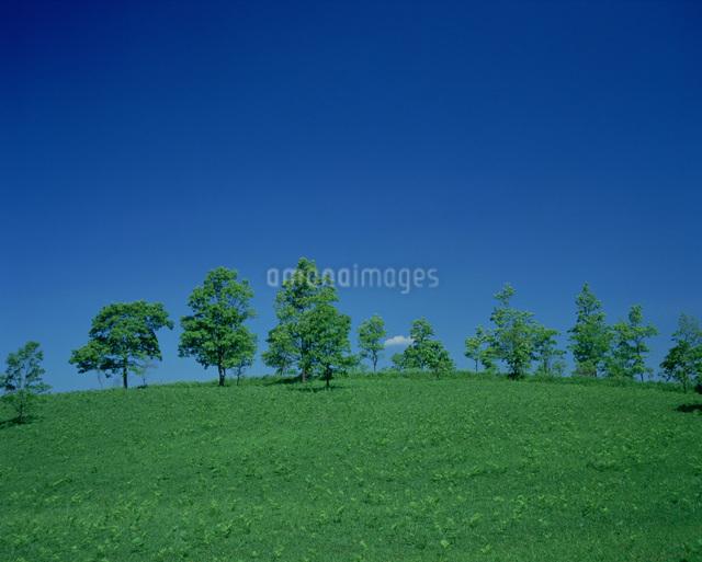 草原と樹 阿蘇山の写真素材 [FYI03303804]