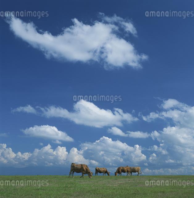瀬の本高原の放牧の写真素材 [FYI03303818]