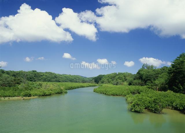 慶佐次湾のマングローブの写真素材 [FYI03303968]