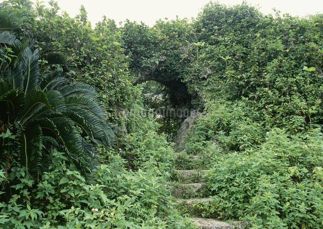 玉城城跡の写真素材 [FYI03303972]