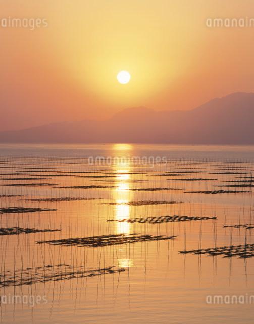 有明海のりひび夕日の写真素材 [FYI03303991]