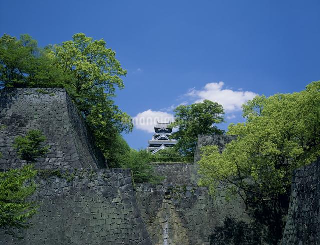 熊本城新緑の写真素材 [FYI03304003]
