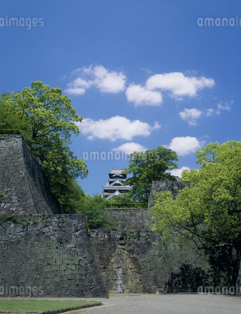熊本城と新緑の写真素材 [FYI03304004]