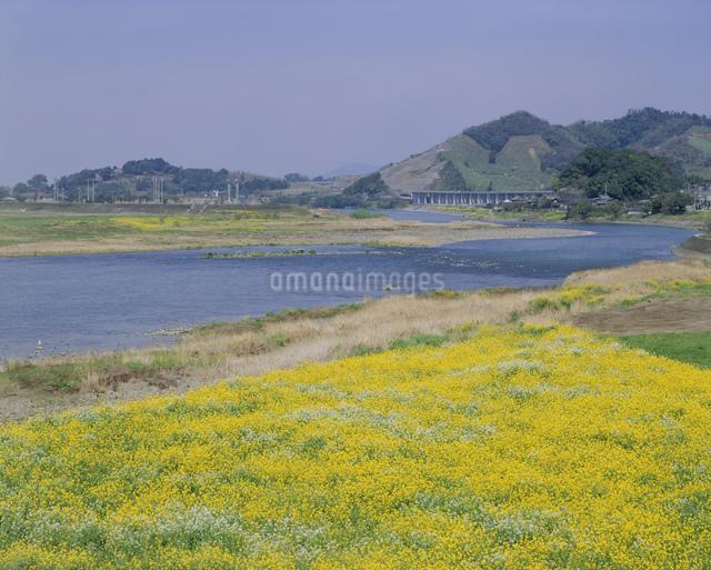 筑後川と菜の花の写真素材 [FYI03304034]