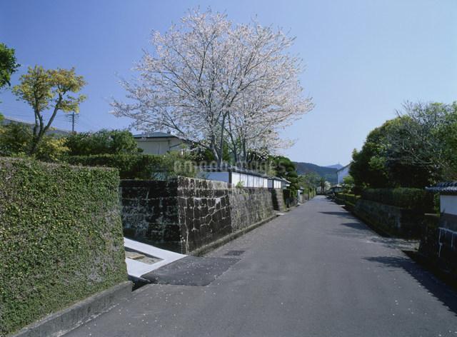 飫肥武家屋敷通りの写真素材 [FYI03304112]