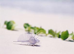 渡口ノ浜と骨貝の写真素材 [FYI03304316]