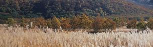 飯田高原の紅葉の写真素材 [FYI03304578]