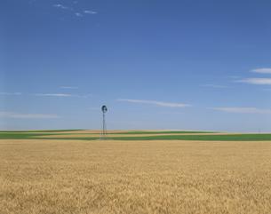 小麦ととうもろこし畑 6月 カンザス州 アメリカの写真素材 [FYI03305793]
