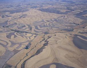 等高線耕作の小麦畑 ワシントン州 アメリカの写真素材 [FYI03305798]