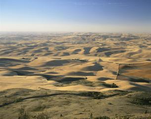 等高線耕作の小麦畑 8月 ワシントン州 アメリカの写真素材 [FYI03305799]