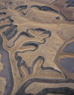等高線耕作の小麦畑 ワシントン州 アメリカの写真素材 [FYI03305800]