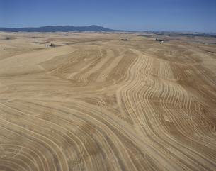 小麦畑 等高線耕作 ワシントン州 アメリカの写真素材 [FYI03305801]