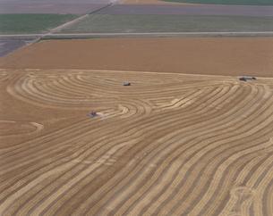 小麦の刈り取り 6月 カンザス州 アメリカの写真素材 [FYI03305806]