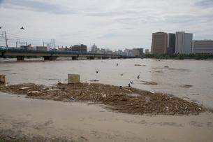 台風で増水した多摩川の写真素材 [FYI03306010]