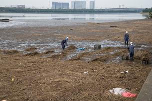 谷津干潟での台風流木撤去作業の写真素材 [FYI03306032]