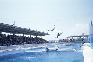 イルカのショー 鴨川シーワールドの写真素材 [FYI03306923]
