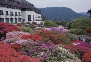 山のホテルのつつじの写真素材 [FYI03307005]