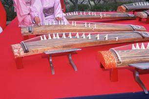 琴の演奏 吉野梅郷の写真素材 [FYI03307020]