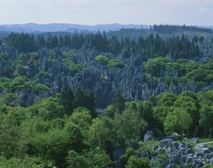 石林の写真素材 [FYI03307373]