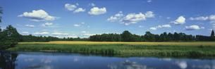 川と菜の花畑  スウェーデンの写真素材 [FYI03310495]