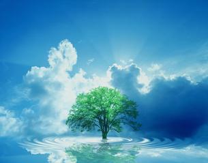 自然環境イメージの写真素材 [FYI03312291]