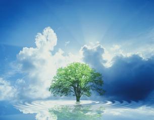 木と波紋と光る雲の自然環境イメージのイラスト素材 [FYI03312427]