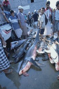ホディダの魚市場の写真素材 [FYI03312676]