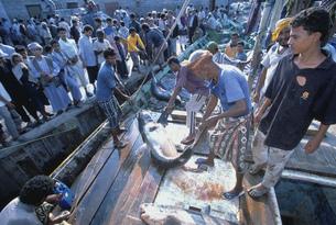 ホディダの魚市場の写真素材 [FYI03312679]