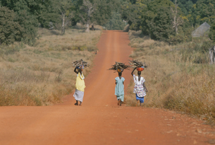 薪を運ぶ女性 タンバクンダ周辺 セネガルの写真素材 [FYI03312883]