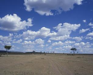 サバンナの雲 マサイマラ 2月 ケニアの写真素材 [FYI03312904]