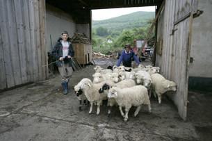 羊飼いの写真素材 [FYI03312947]