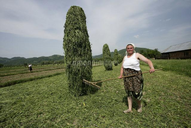 乾し草作り(牧草刈り)の写真素材 [FYI03312948]
