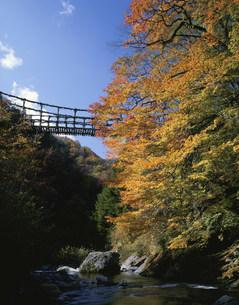 秋の奥祖谷かずら橋の写真素材 [FYI03313317]