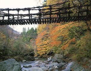 秋の奥祖谷かずら橋の写真素材 [FYI03313320]