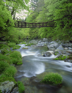 奥祖谷かずら橋の写真素材 [FYI03313388]