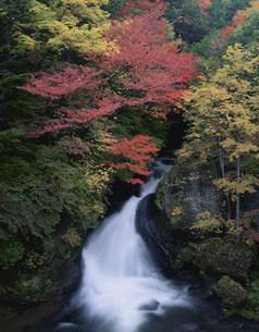 秋の竜頭滝の写真素材 [FYI03313890]