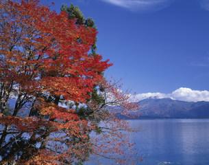 秋の田沢湖と駒ヶ岳の写真素材 [FYI03313965]