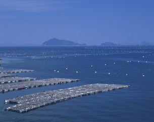 真珠イカダの宇和海の写真素材 [FYI03314034]