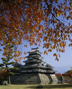 秋の松本城の写真素材 [FYI03314297]
