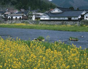 春の旭川と酒蔵の写真素材 [FYI03314301]