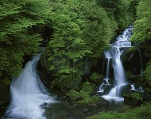 竜頭滝 5月   栃木県の写真素材 [FYI03314549]