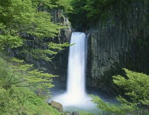 苗名滝 6月  新潟県の写真素材 [FYI03314586]