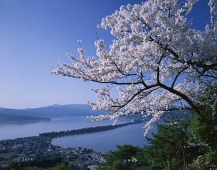 桜の天橋立 傘松公園   4月の写真素材 [FYI03314605]